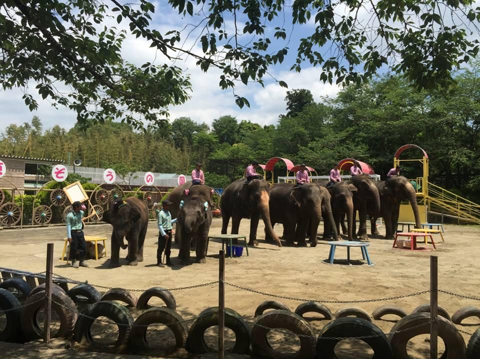 สนร.ญี่ปุ่น เยี่ยมควาญช้างไทยกับนายจ้าง Ichihara Elephant Kingdom จ.Chiba